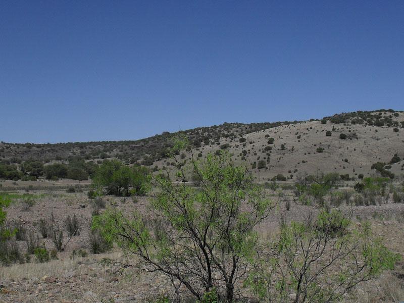 West Texas vegetation